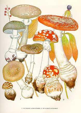 Сушилки для грибов отзывы