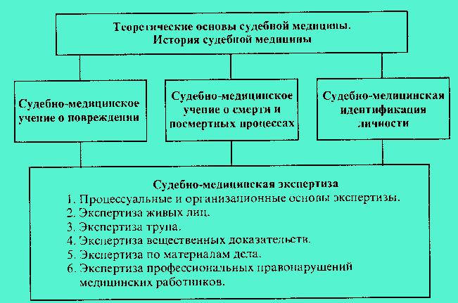 Такая система впервые была предложена в 1985 г. автором(схема 1). Сегодня судебная медицина вступила в этап синтеза...